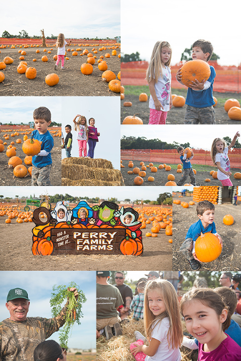 perry farms pumpkin patch fremont